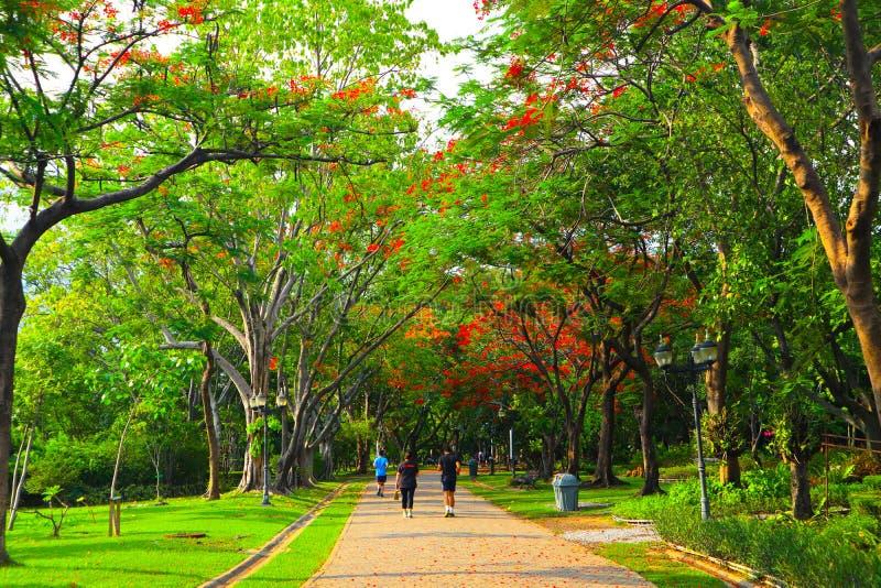 Όμορφα λουλούδια και δάσος δέντρων που εξωραΐζεται στο δημόσιο κήπο το καλοκαίρι στοκ φωτογραφίες με δικαίωμα ελεύθερης χρήσης