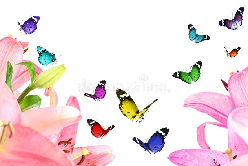 Όμορφα λουλούδια κρίνων και ζωηρόχρωμες πεταλούδες Τρυφερότητα φύσης στοκ φωτογραφία