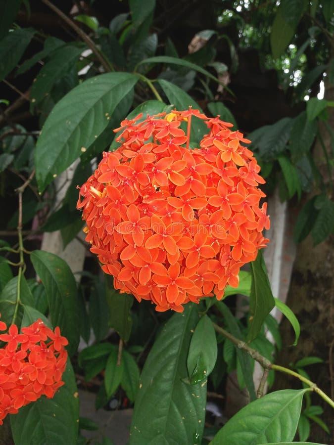 Όμορφα λουλούδια με τα κόκκινα πέταλα στοκ φωτογραφία με δικαίωμα ελεύθερης χρήσης