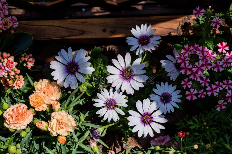 Όμορφα λουλούδια που περιμένουν το τσάι απογεύματος διανυσματική απεικόνιση