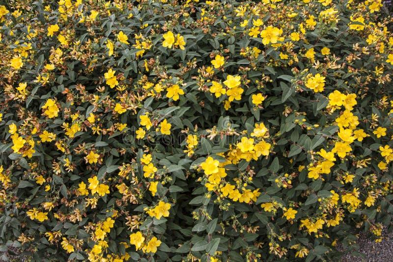 Όμορφα λουλούδια στην άνθιση στοκ φωτογραφία