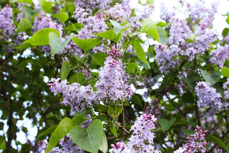 Όμορφα λουλούδια στο Ελσίνκι, Φινλανδία στοκ εικόνα με δικαίωμα ελεύθερης χρήσης