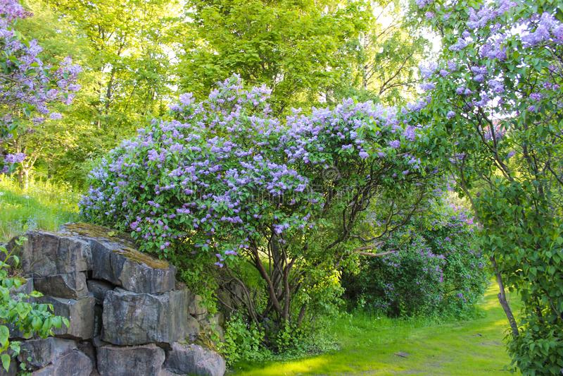 Όμορφα λουλούδια στο Ελσίνκι, Φινλανδία στοκ εικόνες με δικαίωμα ελεύθερης χρήσης