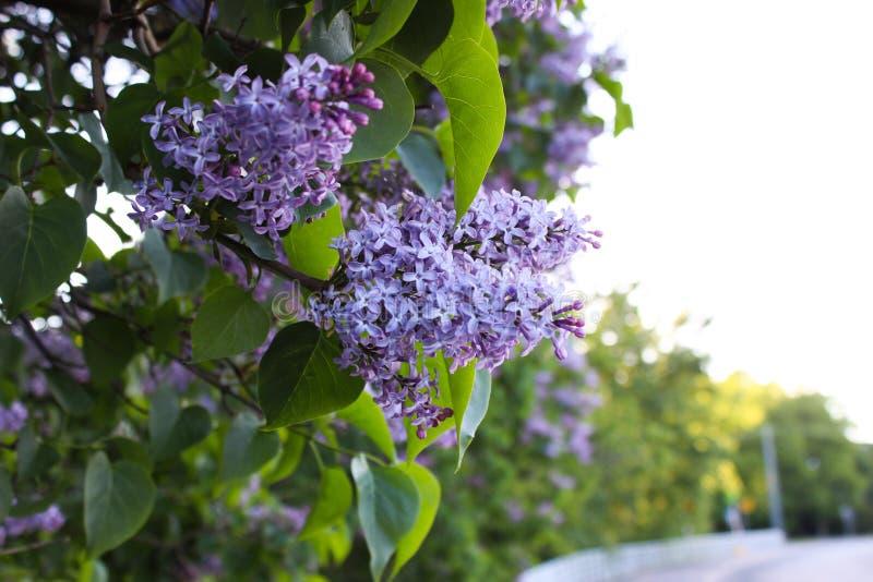 Όμορφα λουλούδια στο Ελσίνκι, Φινλανδία στοκ εικόνες