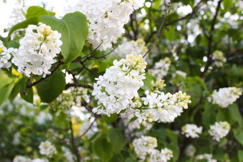 Όμορφα λουλούδια στο Ελσίνκι, Φινλανδία στοκ φωτογραφία με δικαίωμα ελεύθερης χρήσης