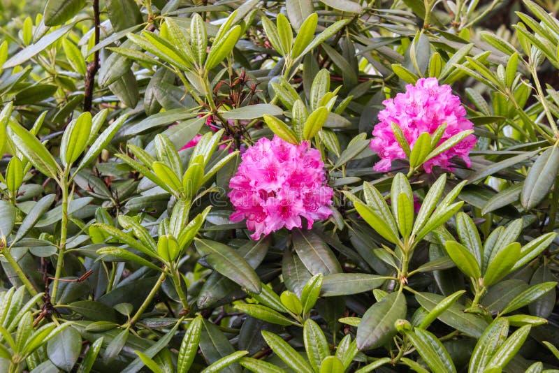Όμορφα λουλούδια στο Ελσίνκι, Φινλανδία στοκ φωτογραφίες