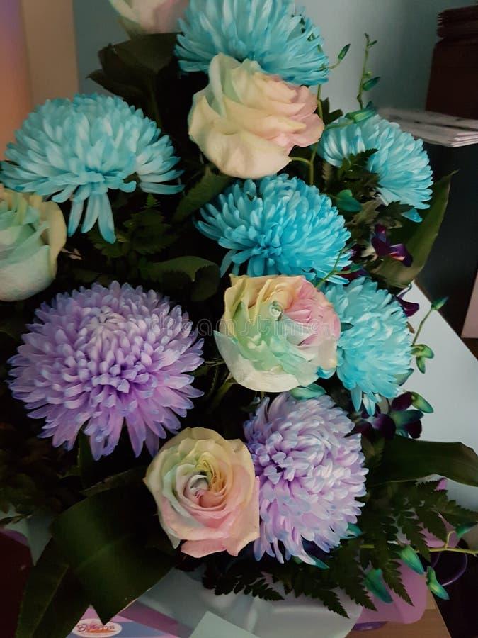 Όμορφα λουλούδια Χρωματισμένα τριαντάφυλλα στοκ φωτογραφία με δικαίωμα ελεύθερης χρήσης