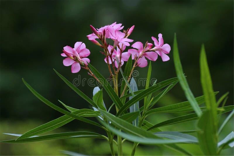 Όμορφα λουλούδια χρώματος που ξεχωρίζουν στοκ φωτογραφία