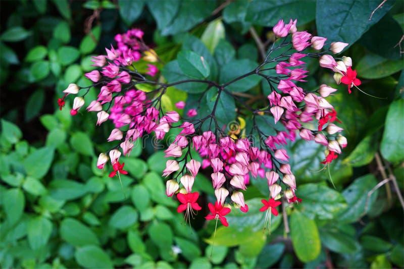 Όμορφα λουλούδια χρώματος που ξεχωρίζουν στοκ εικόνες με δικαίωμα ελεύθερης χρήσης