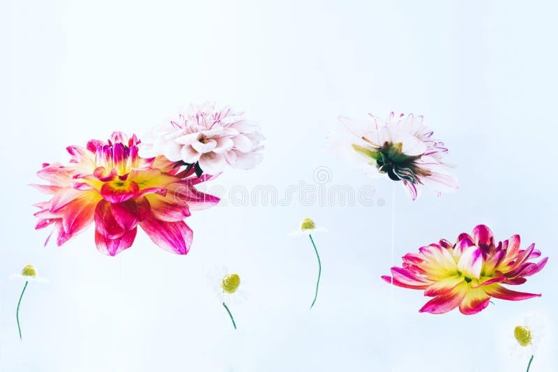 Όμορφα λουλούδια Levitating κάτω από το νερό στοκ φωτογραφίες με δικαίωμα ελεύθερης χρήσης