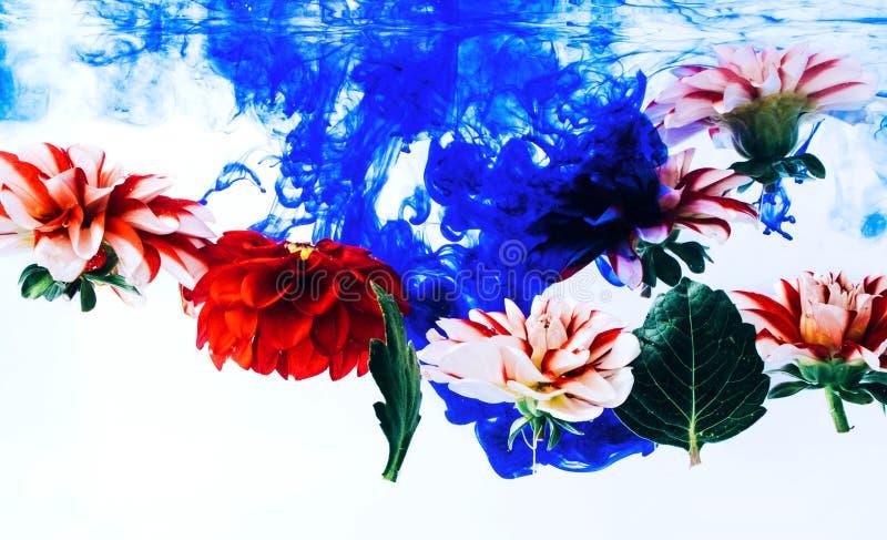 Όμορφα λουλούδια Levitating κάτω από το νερό στοκ φωτογραφία με δικαίωμα ελεύθερης χρήσης