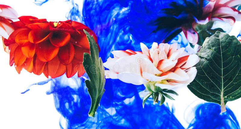 Όμορφα λουλούδια Levitating κάτω από το νερό στοκ εικόνες