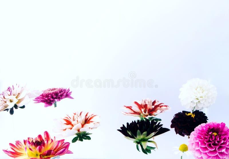 Όμορφα λουλούδια Levitating στο φωτεινό υπόβαθρο στοκ φωτογραφία με δικαίωμα ελεύθερης χρήσης