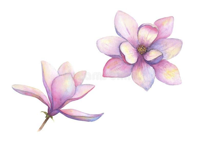 Όμορφα λουλούδια magnolia Watercolor καθορισμένα απομονωμένα στο άσπρο υπόβαθρο Κομψή βοτανική απεικόνιση Watercolour διανυσματική απεικόνιση