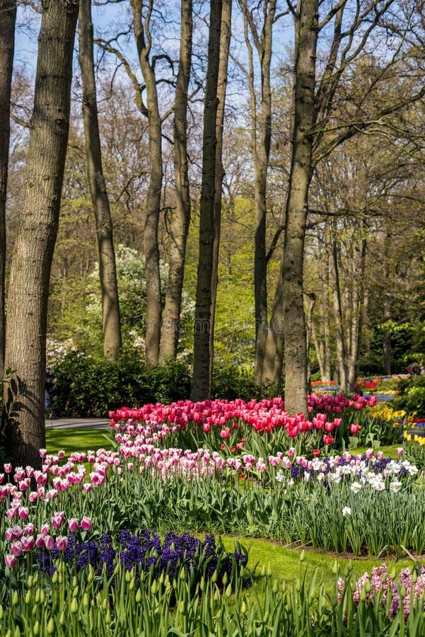Όμορφα ολλανδικά λουλούδια στοκ φωτογραφίες