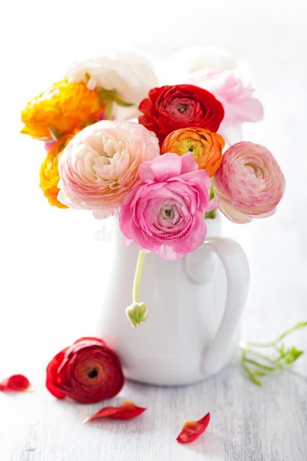 Όμορφα λουλούδια βατραχίων στο βάζο πέρα από το λευκό στοκ φωτογραφίες