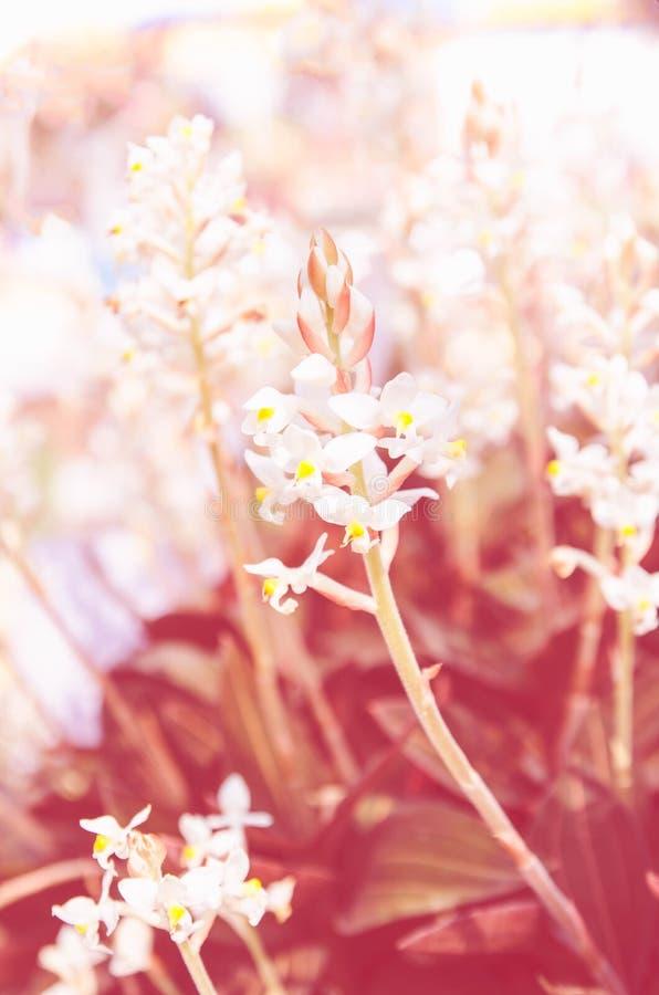 Όμορφα λουλούδια με το φίλτρο χρώματος στοκ εικόνες