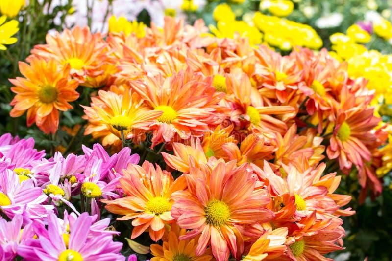 όμορφα λουλούδια στοκ εικόνες