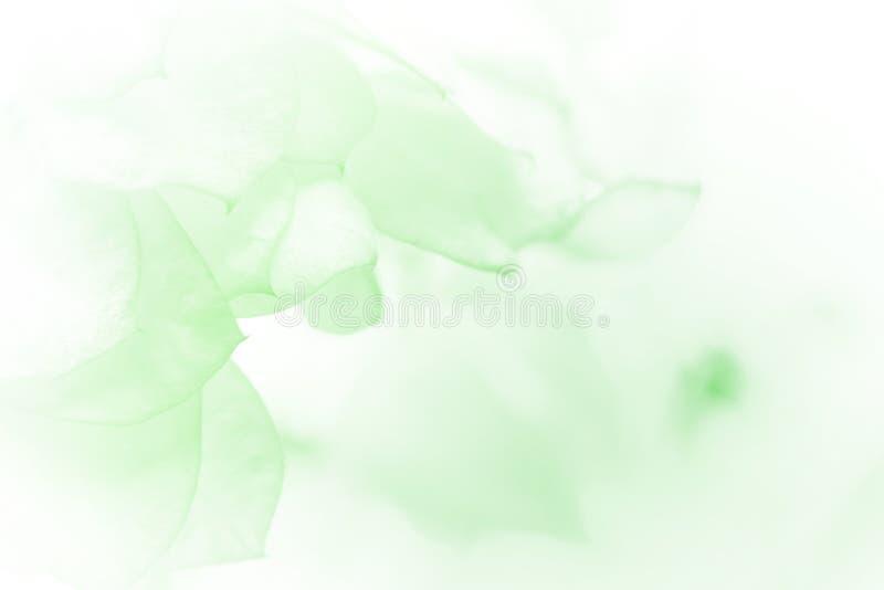 όμορφα λουλούδια απεικόνιση αποθεμάτων