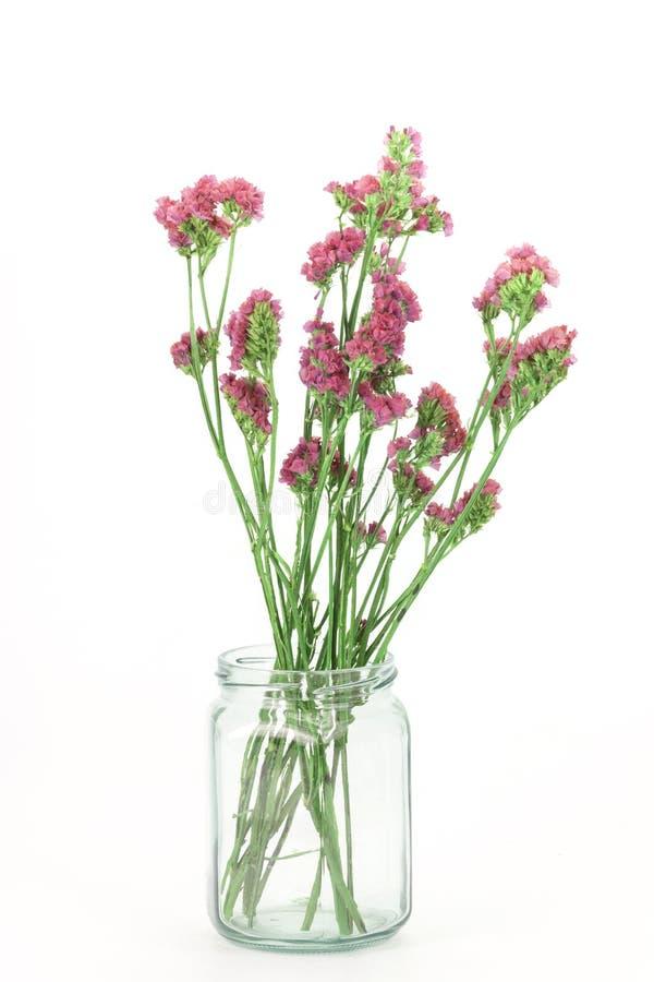 Όμορφα λουλούδια Statice που απομονώνονται στοκ εικόνες με δικαίωμα ελεύθερης χρήσης
