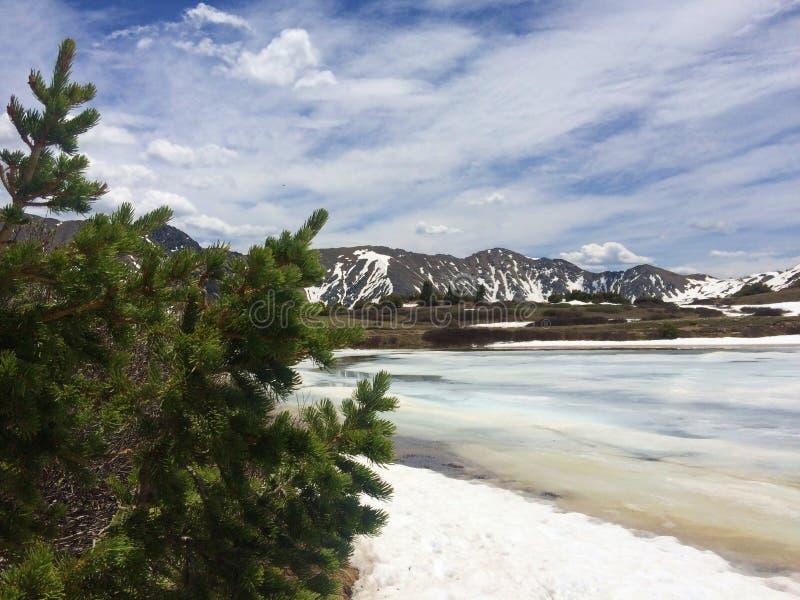 Όμορφα παγωμένα λίμνη και πεύκο στοκ εικόνα με δικαίωμα ελεύθερης χρήσης