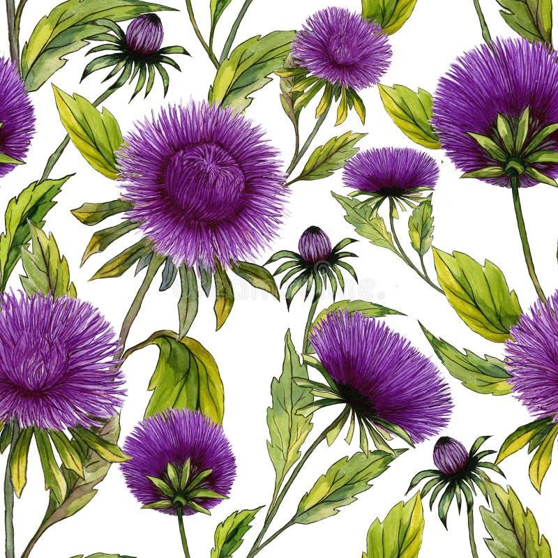 Όμορφα πορφυρά λουλούδια αστέρων με τα πράσινα φύλλα στο άσπρο υπόβαθρο Άνευ ραφής θερινό floral σχέδιο υψηλό watercolor ποιοτική απεικόνιση αποθεμάτων
