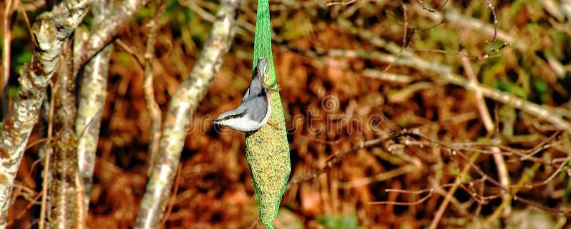 Όμορφα πουλιά στοκ φωτογραφία