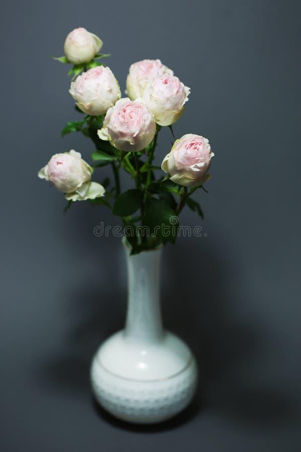 Όμορφα ροζ τριαντάφυλλα κλείνουν τα μακροσκελή λουλούδια στοκ εικόνες