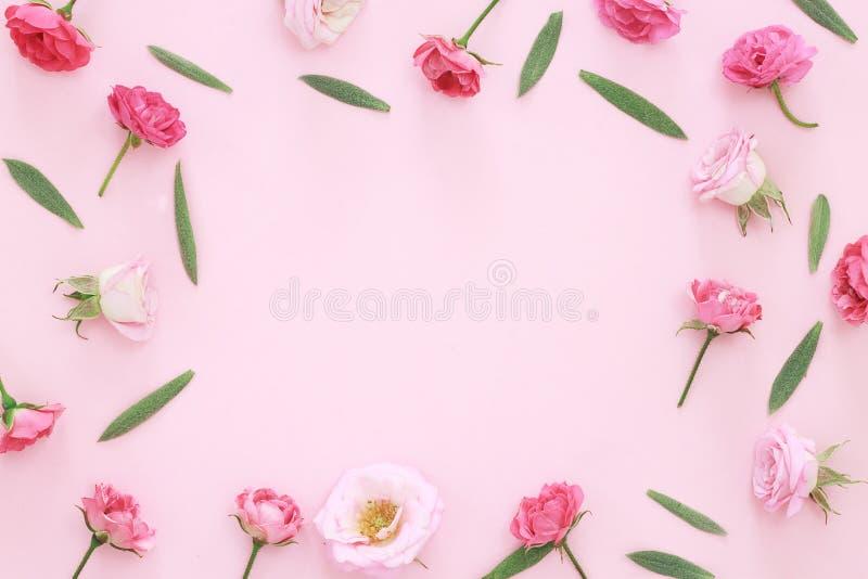 Όμορφα ρόδινα κεφάλια τριαντάφυλλων στο ρόδινο υπόβαθρο στοκ εικόνες