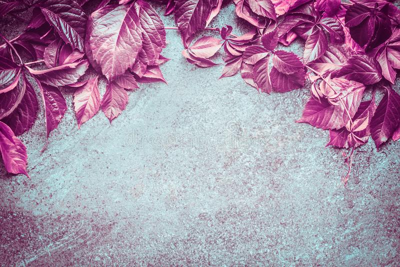 Όμορφα ρόδινα φύλλα σταφυλιών φθινοπώρου άγρια που συνθέτουν στο σκοτεινό εκλεκτής ποιότητας υπόβαθρο, τοπ άποψη στοκ φωτογραφία