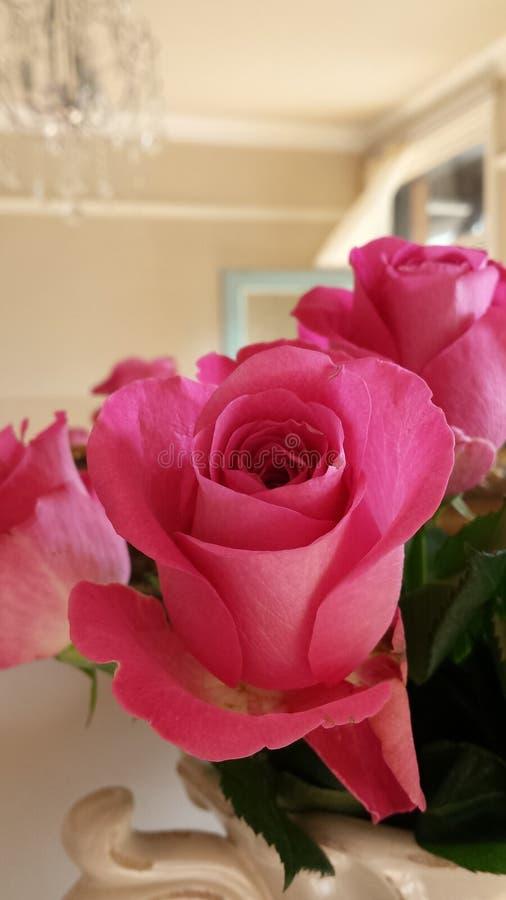 Όμορφα ρόδινα τριαντάφυλλα σε μια κανάτα κρέμας στοκ φωτογραφία