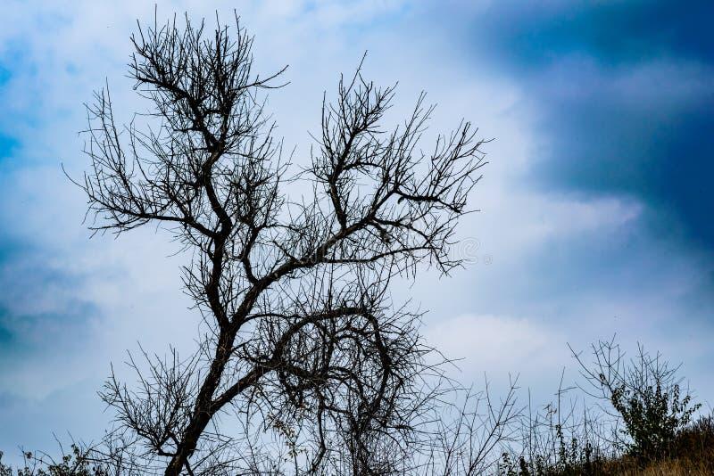 Όμορφα τοπία της Ρωσίας Περιοχή Rostov Ζωηρόχρωμες θέσεις Πράσινοι βλάστηση και ποταμοί με τις λίμνες και τα έλη Δάση και mea στοκ εικόνα με δικαίωμα ελεύθερης χρήσης