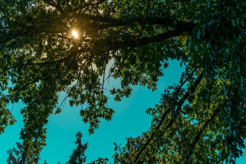 Όμορφα τοπία της Ρωσίας Περιοχή Rostov Ζωηρόχρωμες θέσεις Πράσινοι βλάστηση και ποταμοί με τις λίμνες και τα έλη Δάση και mea στοκ φωτογραφίες