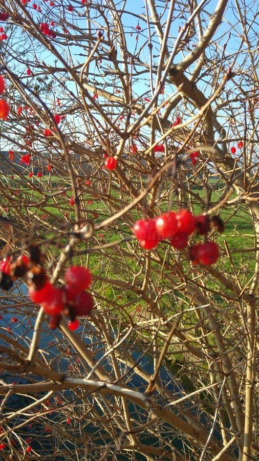 Όμορφα τοπίο και δέντρα στοκ φωτογραφίες με δικαίωμα ελεύθερης χρήσης