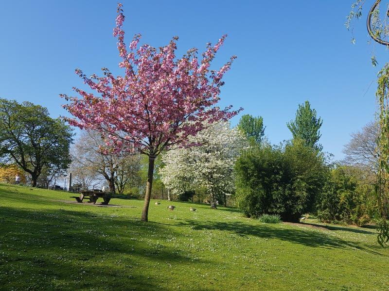 Όμορφα τρία με τα όμορφα λουλούδια στοκ φωτογραφία με δικαίωμα ελεύθερης χρήσης