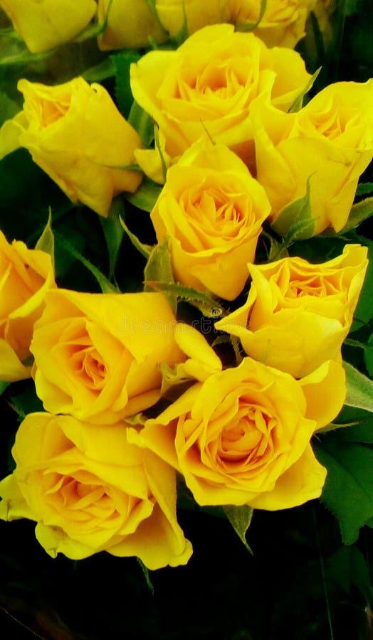 Όμορφα τριαντάφυλλα διανυσματική απεικόνιση