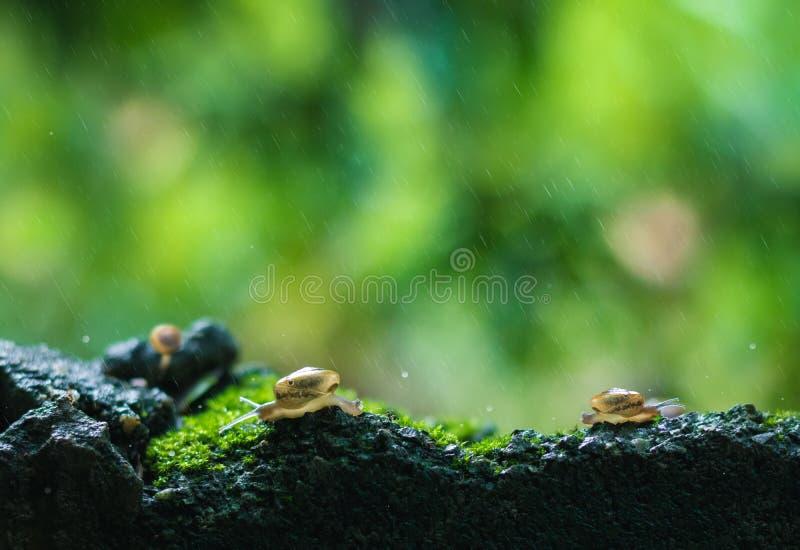 Όμορφα υπόβαθρο και περιβάλλον φύσης Τα σαλιγκάρια σέρνονται στη φύση ανάμεσα στη δυνατή βροχή Πάλη με όλα τα προβλήματα που έρχο στοκ εικόνες