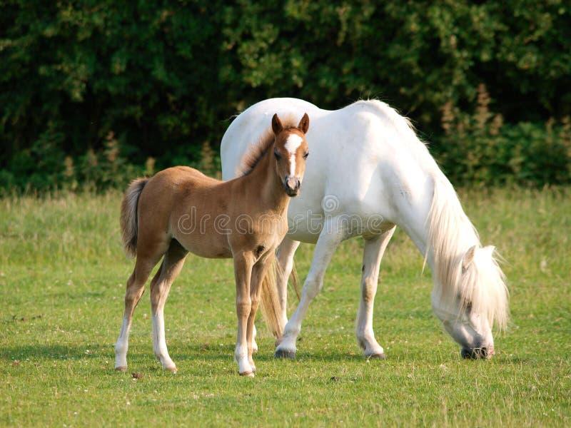 Όμορφα φοράδα και Foal στοκ φωτογραφία με δικαίωμα ελεύθερης χρήσης