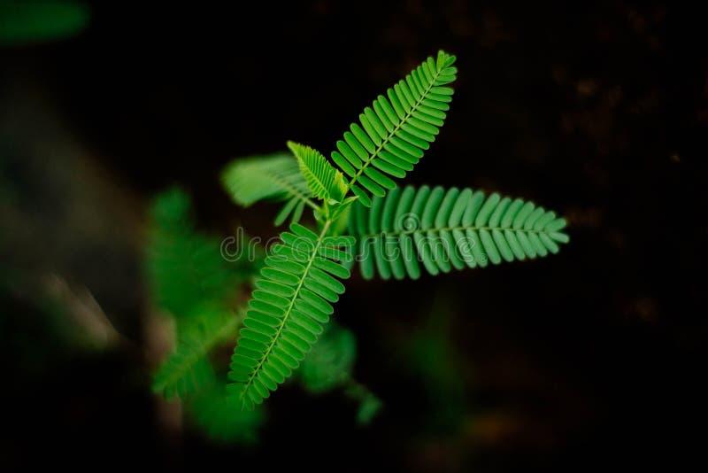 όμορφα φυσικά πράσινα φύλλα στοκ εικόνες