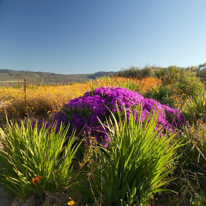 όμορφα φυτά τοπίων λουλο&up στοκ φωτογραφία με δικαίωμα ελεύθερης χρήσης