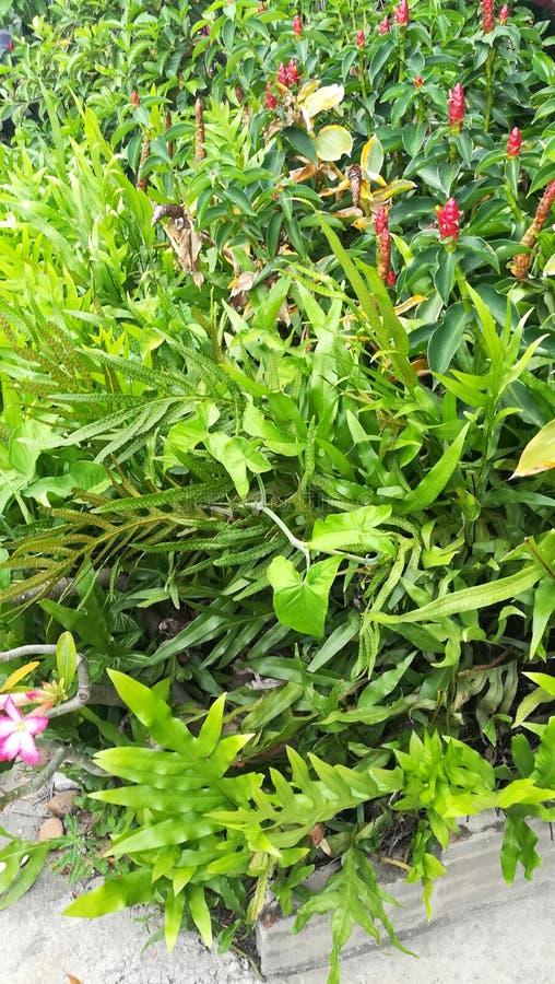 Όμορφα φυτά στοκ εικόνες με δικαίωμα ελεύθερης χρήσης
