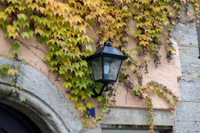 Όμορφα φύλλα φθινοπώρου των άγριων σταφυλιών στους τοίχους του σπιτιού στοκ φωτογραφίες