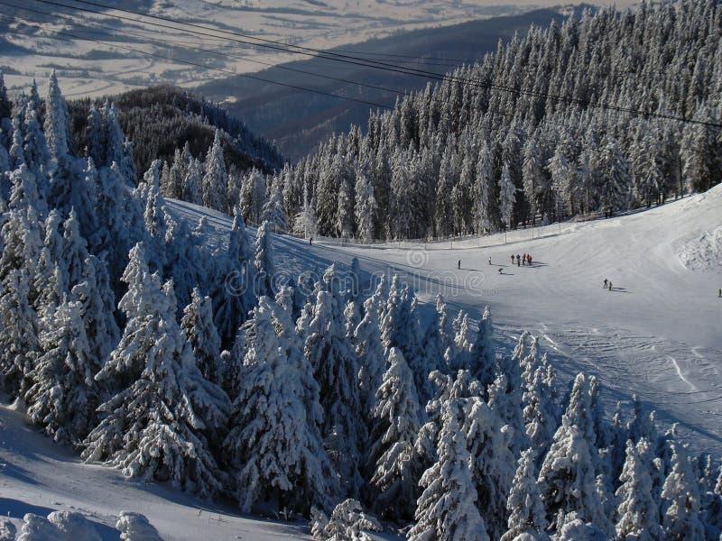 Όμορφα χιόνια καλυμμένα με κωνοφόρα δέντρα τις ηλιόλουστες μέρες στοκ φωτογραφίες
