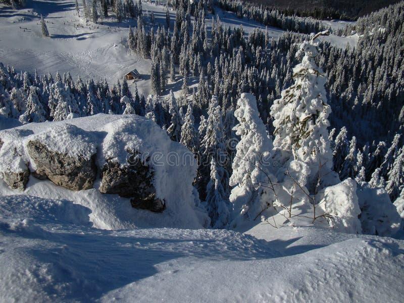 Όμορφα χιόνια καλυμμένα με κωνοφόρα δέντρα τις ηλιόλουστες μέρες στοκ εικόνα με δικαίωμα ελεύθερης χρήσης
