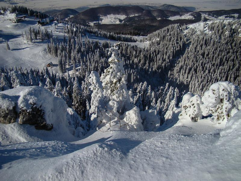 Όμορφα χιόνια καλυμμένα με κωνοφόρα δέντρα τις ηλιόλουστες μέρες στοκ εικόνες