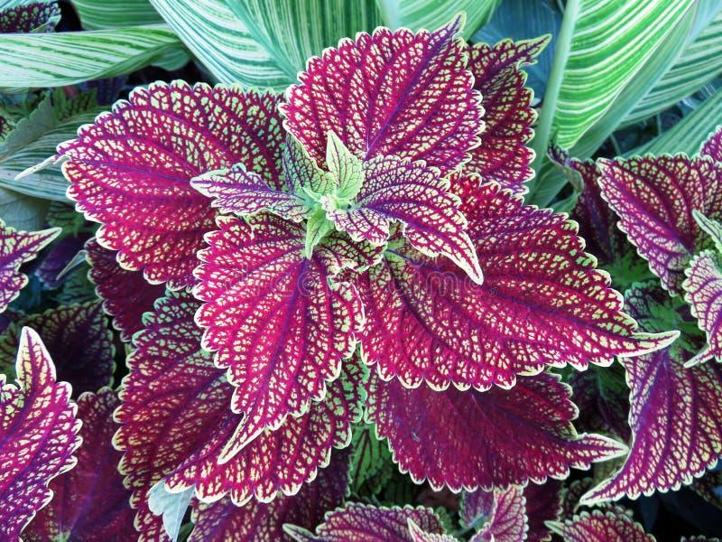 Όμορφα χρωματισμένα θερινά φύλλα στοκ φωτογραφία με δικαίωμα ελεύθερης χρήσης