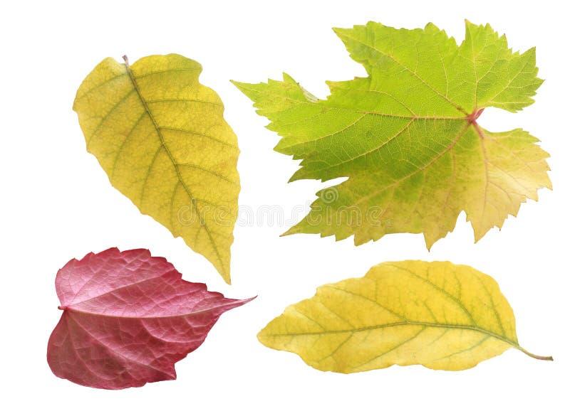 Όμορφα χρωματισμένα κρητιδογραφία φύλλα φθινοπώρου στοκ εικόνα