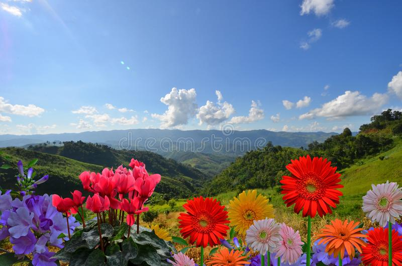 Όμορφα χρωματισμένα λουλούδια στην κορυφή βουνών με το μπλε ουρανό στοκ φωτογραφίες