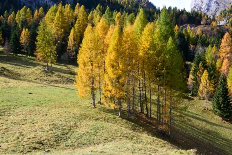 Όμορφα χρώματα του δάσους φθινοπώρου μεταξύ κίτρινος, πορτοκαλής και πράσινος στοκ εικόνα