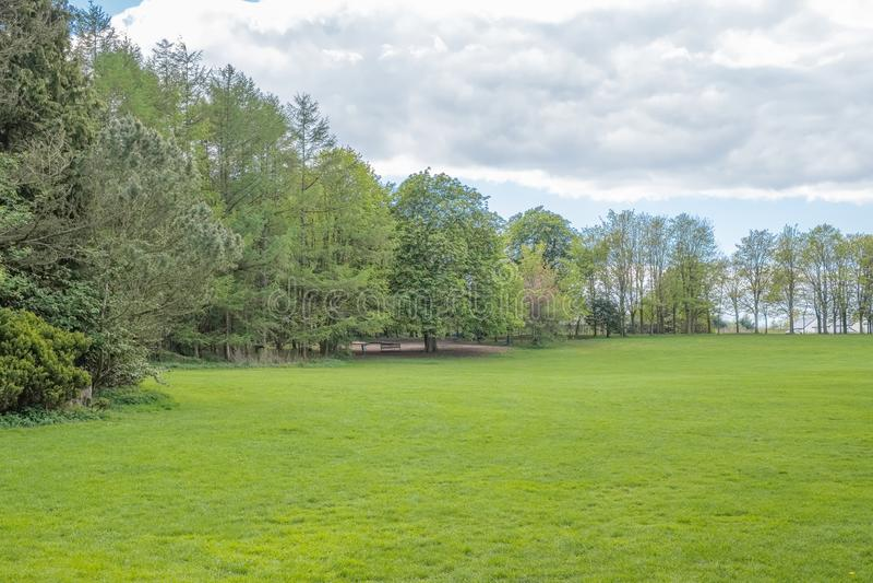 Όμορφα ώριμα σκωτσέζικα δέντρα που τίθενται σε ένα σκωτσέζικο πάρκο το καλοκαίρι στοκ φωτογραφίες